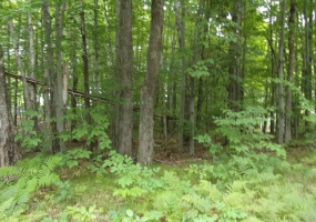 on Country Club, Lakewood, Wisconsin 54138, ,Lot,Lots For Sale,Country Club,1108